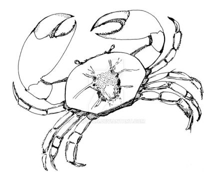 Crab, for redesign by SyA by MgHPcbln
