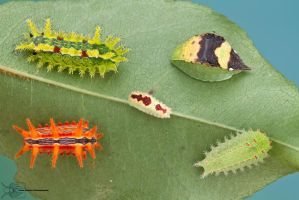 Slug caterpillar menagerie by ColinHuttonPhoto