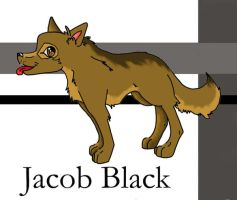 Jacob Black-pup by twilight-luv