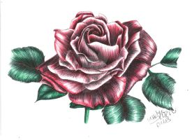 Red Rose by KerstinSchroeder