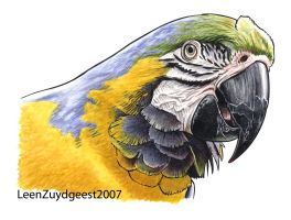 blue-and-yellow macaw by LeenZuydgeest