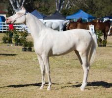 STOCK Canungra Show 2013-5 by fillyrox