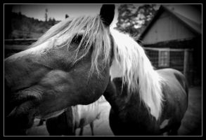 horse by montterius