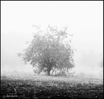 Tree 20 by orlibraorli