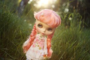 Midsummer rose by Illves