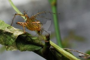 yellow spider on a branch by sjavaldienno