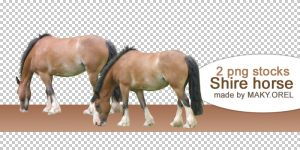 PNG STOCK SET: Shire horse by MAKY-OREL