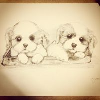 Puppies by fairytailaddict4life