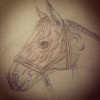 ~Horse Sketch~ by Belynx16