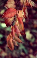 Soon to fall. by 7DS7