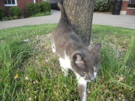 Campus Cat by kassie