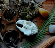 Still Life with Bunny Skull by lupagreenwolf