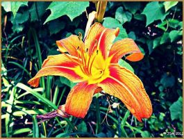 Orange Flower by JDM4CHRIST