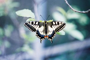 Analog Butterfly by filipa-marques