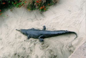 Gharial by TheBuggiest