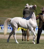 STOCK - Gold Coast show 196 by fillyrox