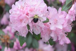 Blossom and Bee 2 by Miss-Tbones