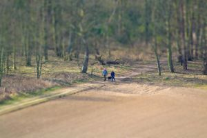 Miniature Dog Walkers by Preachman