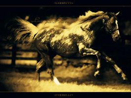 Free Horse by Almirith7