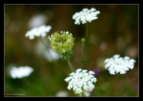 A fairy's crown by LordLJCornellPhotos