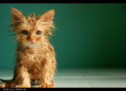 Wet Kitty by cague6