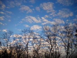 Trees and Clouds 2 by natureflowerstock