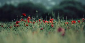 .field of innocence by shiek0r