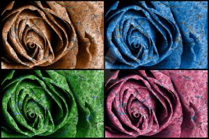 Organic Rose Macro - Exclusive Stock Pack by somadjinn