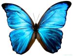butterfly 1 by kayne-stock