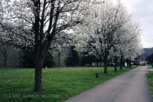 Spring Sprung by soPWNEDXcore