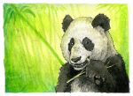 Bamboo Noms by LisaCrowBurke