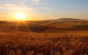 Palouse Sunset 17 by krovakny