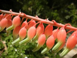 String of coral flowers by fosspathei
