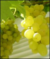 Grapes by Dkyo