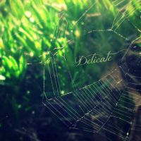 Delicate by likepianomusic