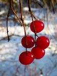 Winter Red by jezebel144