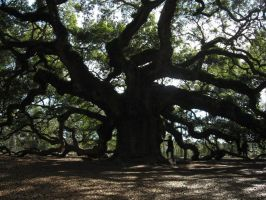 Angel Oak II by Naurien