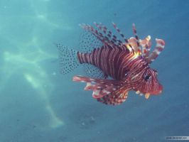 Lionfish by Yoven