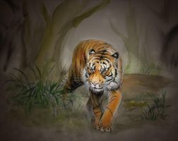 Sumatran tiger4 by Emushi