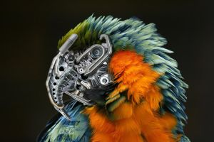 robotic parrot birdy by IsenFilms