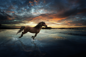 wind chaser by candid-crocodiles