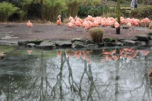 flamingos and winter by abcdefoxx