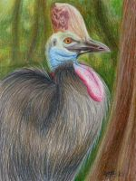 Cassowary by tuftedpuffin