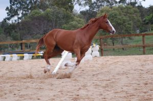 ASH canter side on lil spot by Chunga-Stock