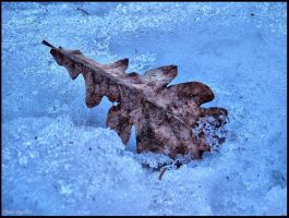 Frozen Leaf by phoenixxx72