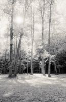 White Forest infrared by ti-jean