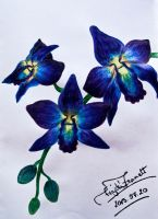 Blue and purpe orchidea by zsanu