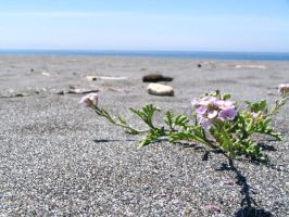 Flowers of the sand by halwilliams