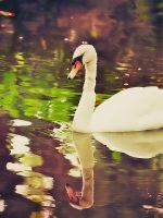 swan. by kathero3