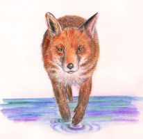 Fox by nagogore